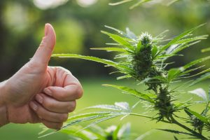is it legal to buy cannabis